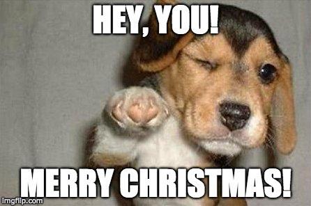 Dog Christmas Tree Meme.Dog Christmas Meme