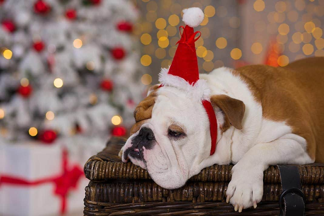 These Are The Best Christmas Dog Memes You'll See Today!